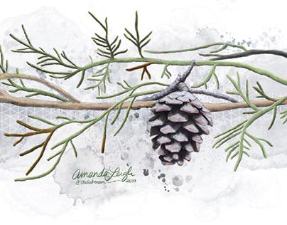 Winter Pinecone