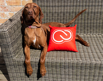 CC Pillow - Adobe Live