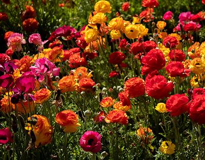 """""""Pra não dizer que não falei das flores"""""""