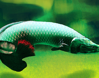 Arapaima Digiital Drawing