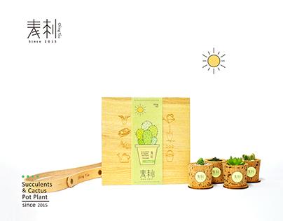 青刺 Ching Tzu - succulents & cactus pot plant