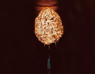 Illumination of Bark Fiber