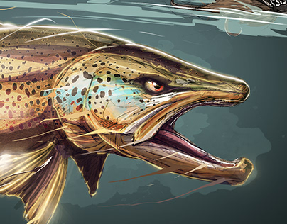 Brown trout Layers drawing stages