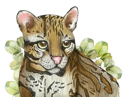 Fauna colombiana- Tigrillo