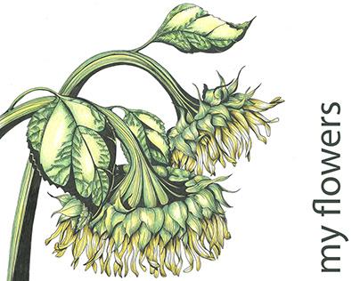 Hand drawing Botanical illustration and patterns