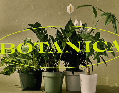 BOTANICA DISPLAY