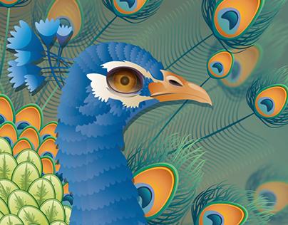 Peacock - bird