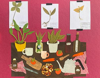 Carrots, autumn, herbarium
