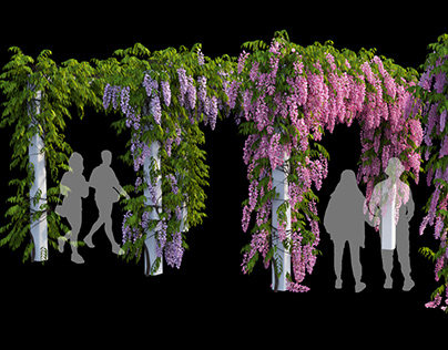 wisterial plant 09
