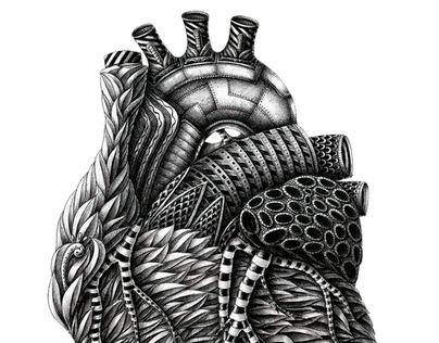 Anatomy (part 1)