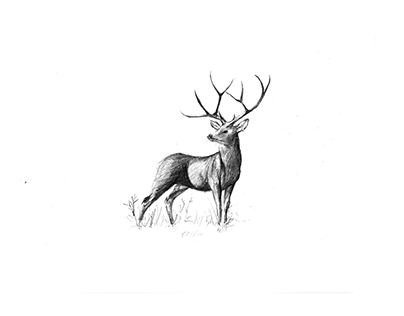 Deer/ Pen & Brush