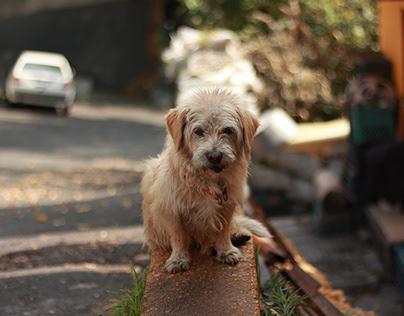 Proyecto de foto: perros callejeros