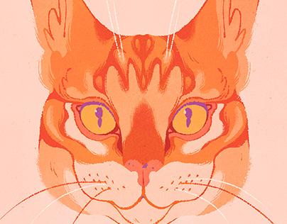 Maddie the Cat