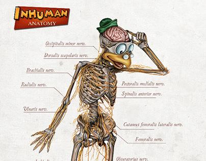 INHUMAN ANATOMY series2 Gyro's anatomy