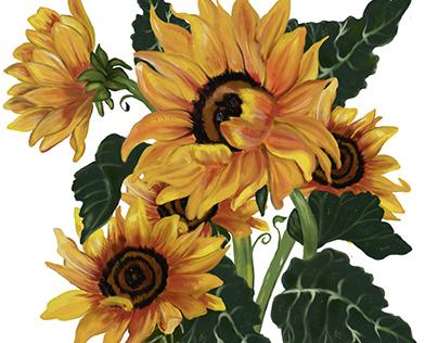 sunflower digital painting