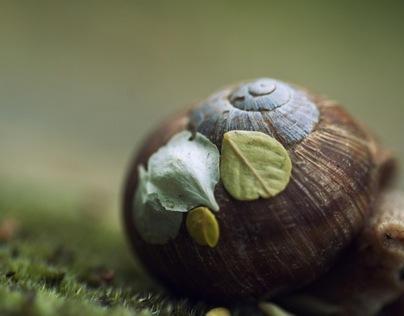 Nature Closeup
