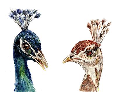 Nature - Scientific illustrations