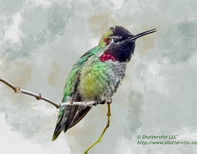 Experimental Watercolor Hummingbird Pieces