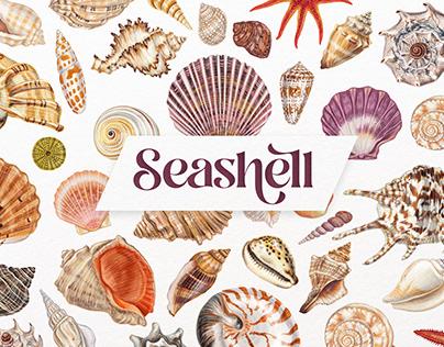 Sea you! seashell illustrations.