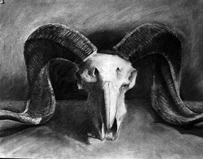 Goat Skull - charcoal academic practice