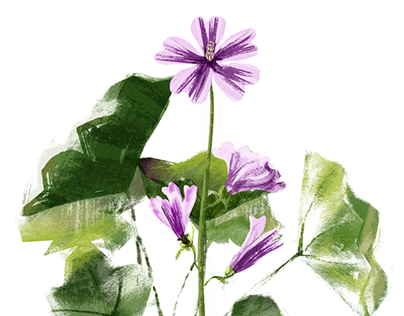Wildflowers - series of illustrations for a local park