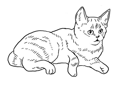 drawings of cats I saw in the films