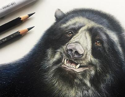ILLUSTRATION - Animales en vías de extinción