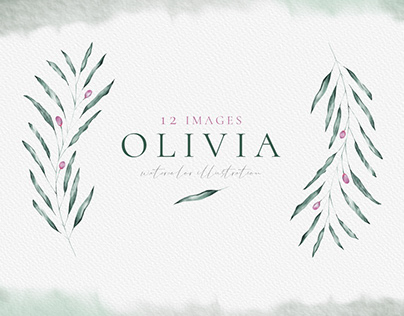Olivia - watercolor olive illustration