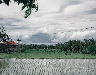 Monkey Forest :: Ubud, Bali