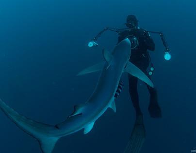 blue shark story