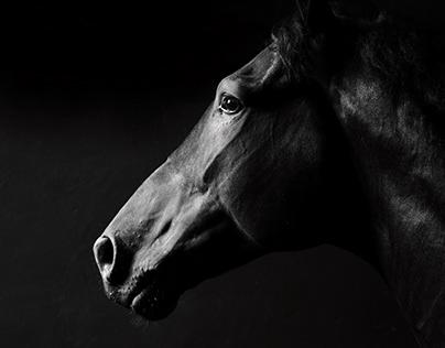 Just horses 1