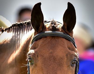 Equestrian Life.