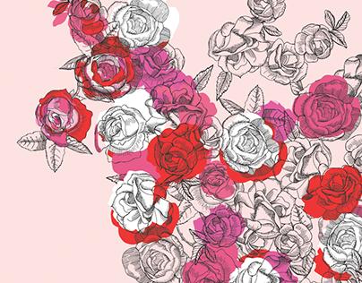 Ilustración Rosa de los 100 pétalos.