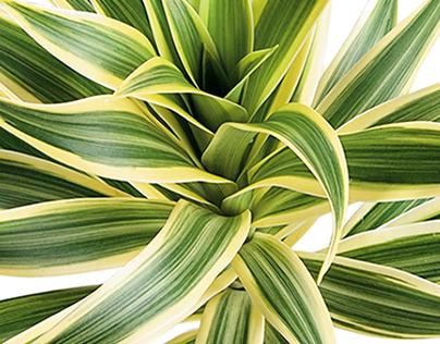 FLOWERING PLANT TOXONOMY