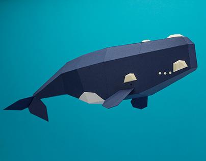 Colección cetácea