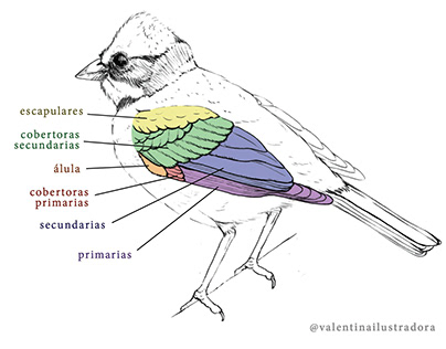 Bird anatomy infographic