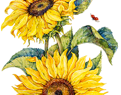 Sunflowers / Poppies / watercolor