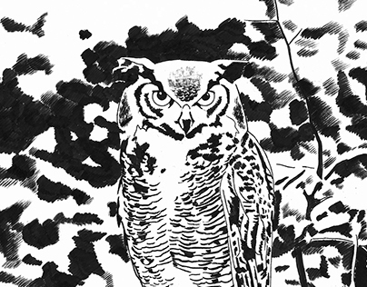 Owl Comic