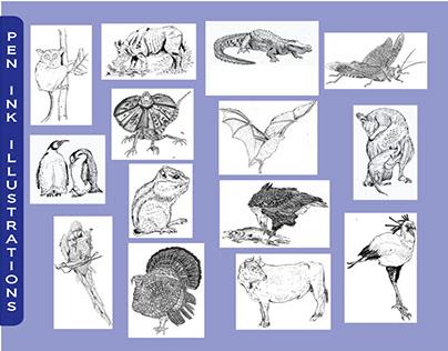 Hand Drawing Illustrations
