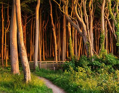 A Summer Beneath The Trees, Pt. II