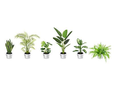 Houseplant Vector Illustrations