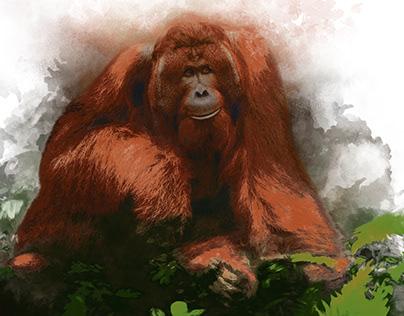 Orangutang in Watercolour