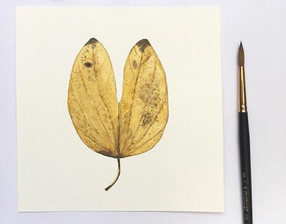 Série folhas em aquarela
