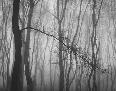 Dark and Foggy Woods