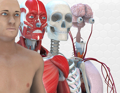 """""""Human Body Anatomy"""" for After Effects"""