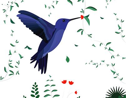 Humming Bird, Animation