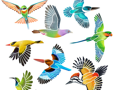 Colourful birds of Singapore