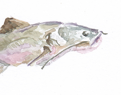 Endangered Species - Watercolor Series.