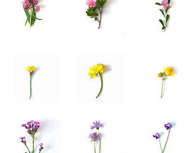 Typology of flowers