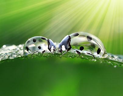 Droplets of ladybugs
